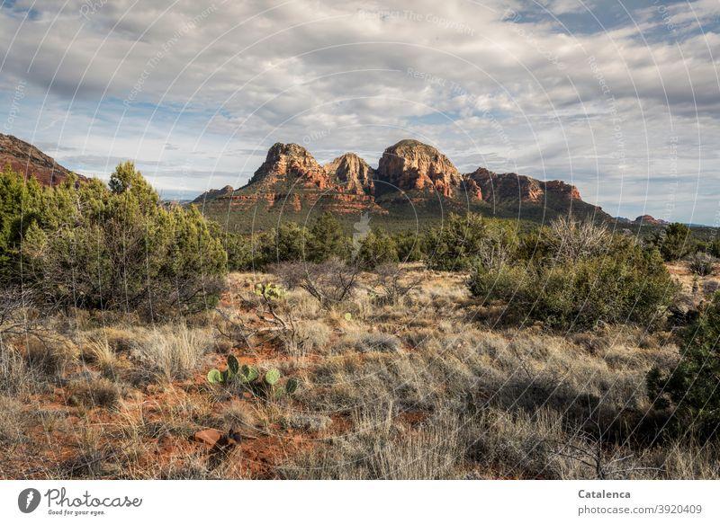 Rote Felsformation in der Steppe Landschaft Natur Halbwüste Vegetation Gras Kakteen Büsche Sand Himmel Wolken Dürre Umwelt Tageslicht Ferne Grün Orange Blau
