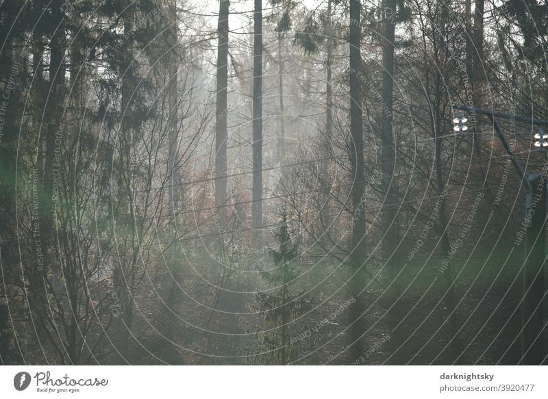 Natur Aufnahme eines Walde mit einer einfachen Leitung zum Transport von Elektrizität nachhaltig pflanzen aufforsten Erde junge alte Mischung Zentralperspektive