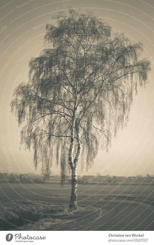 Kahle Birke im Winter. Einzelstellung an einem Weg inmitten von Feldern. Im Hintergrund sind Häusersilhouetten zu sehen. Diesiges Wetter,  Vintage Farben, monochrom