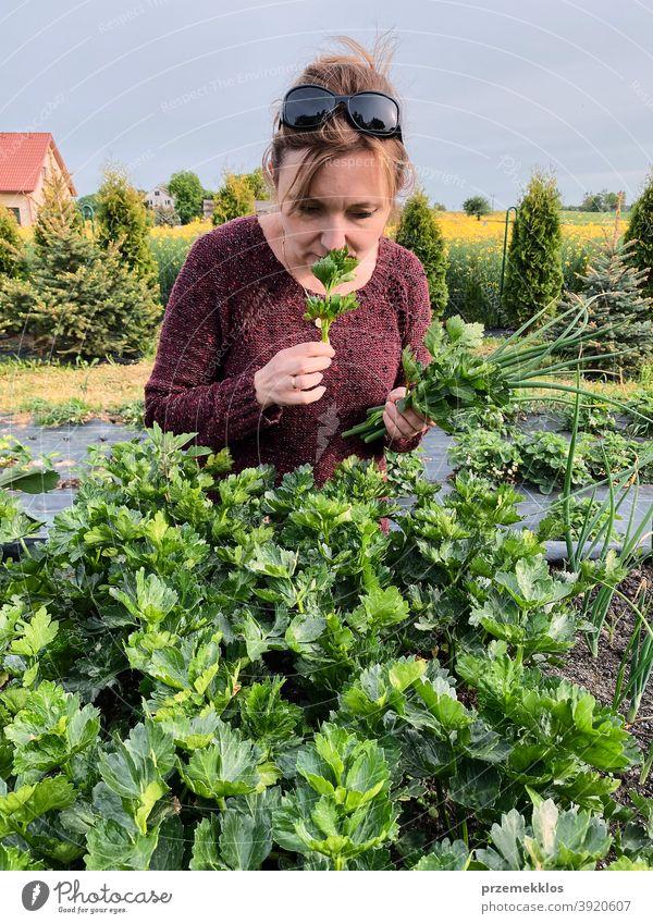 Frau pflückt das Gemüse in einem Garten Aktivität Erwachsener landwirtschaftlich Ackerbau authentisch Hinterhof offen lässig Konzept Land Ernte Tag Tageslicht