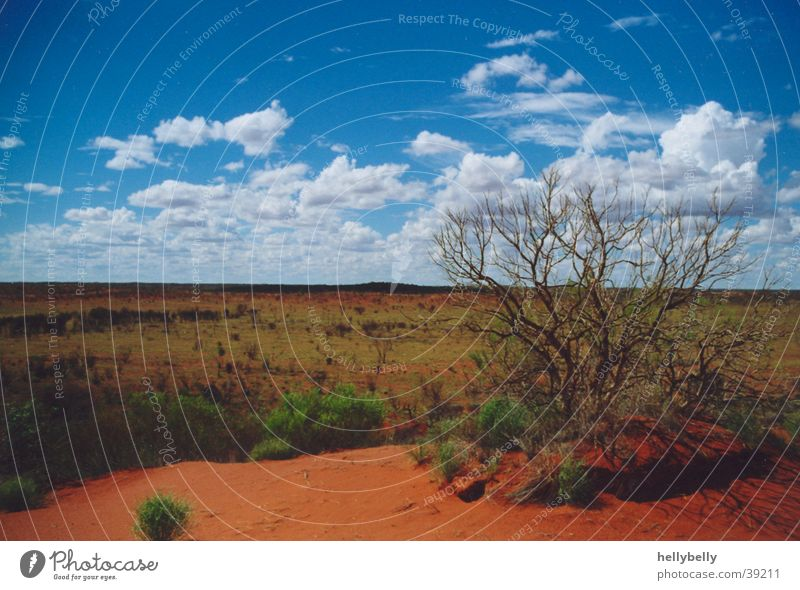 outback Outback Australien Wüste dünn roter sand Ferne