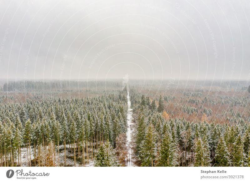 Verschneiter und gefrorener Winter von oben, der durch einen weißen Wald führt. Straße Wälder verschneite Antenne Baum Natur Wetter Saison malerisch Landschaft