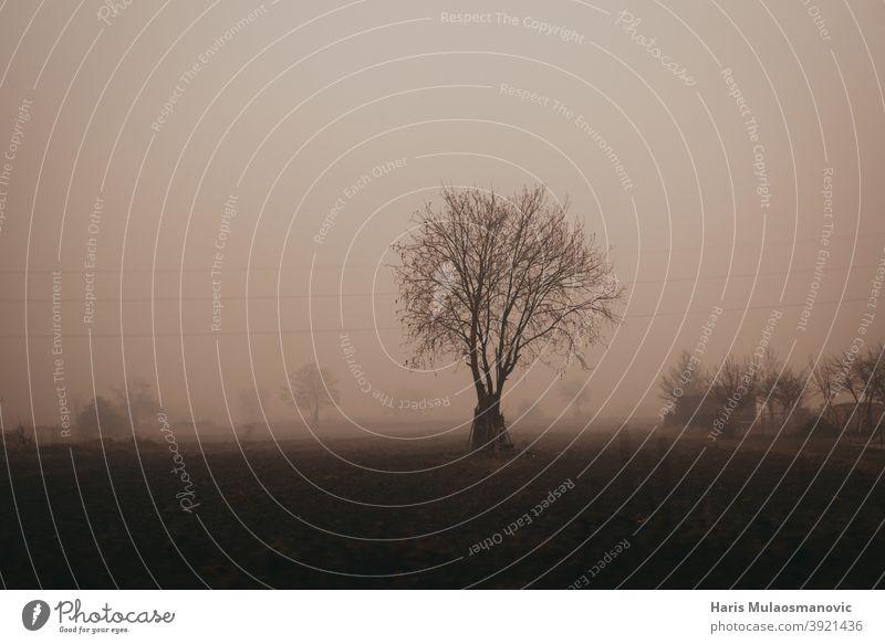hohe Luftverschmutzung ,dichter Nebel, verschmutzte Luft, Bäume im Nebel Air Luftqualität schwarz bosnien und herzegowina atmen Großstadt Stadtbild Gefahr Tag