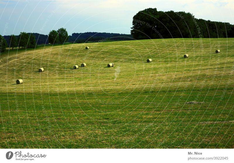 Heuernte Landschaft Natur Wiese Feld grün Gras Heuballen Ernte Landwirtschaft Ackerbau Hügel hügelig ländlich Umwelt Himmel Wald landwirtschaftlich Heu machen