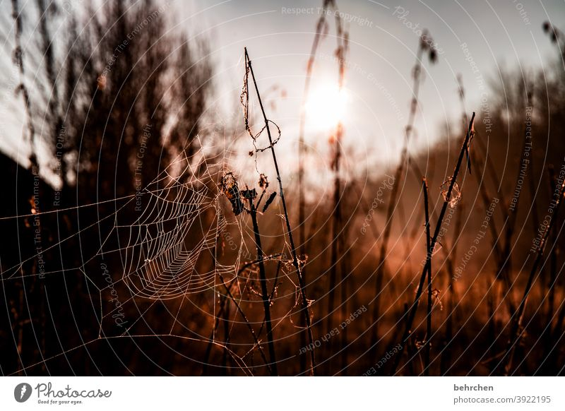 vernetzt Jahreszeiten Winter Herbst Wald Kunstwerk spinnenweben verträumt Gegenlicht Licht Feld Blume Zweige u. Äste Garten Wiese Sonnenaufgang Sonnenlicht