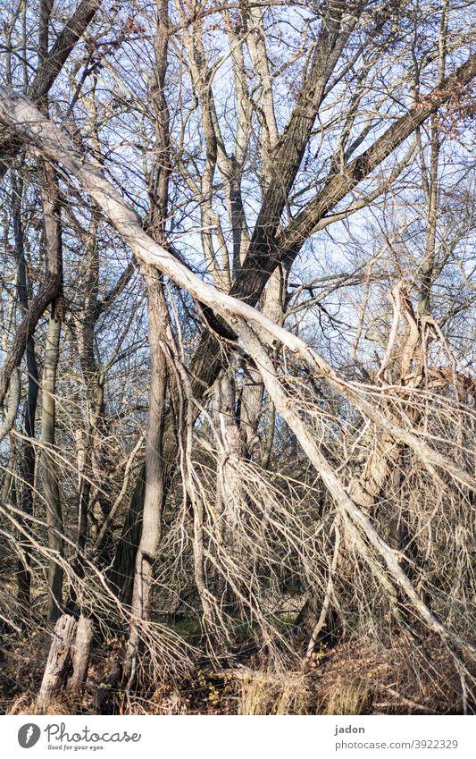 kein ausweg. Bäume kreuz und quer Außenaufnahme Strukturen & Formen abstrakt Menschenleer diagonal Urwald Natur Naturschutzgebiet Streifen Muster umfallen