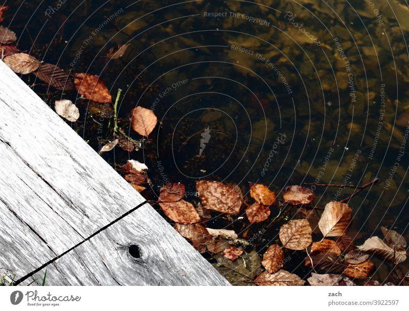 Reste vom Herbst herbstlich Herbstlaub Blatt Natur Herbstfärbung Laubwerk Wasser See Teich tümpel Steg Holz kühl kalt feucht nass Blätter Vergänglichkeit