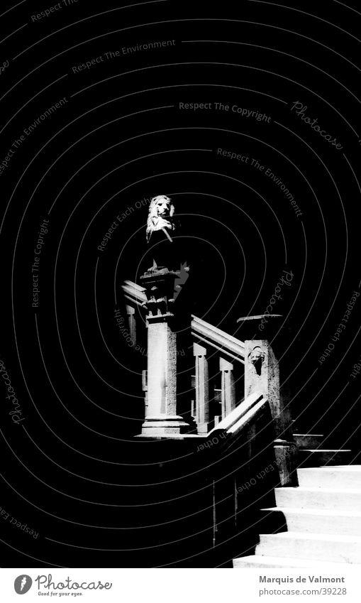 Stufenwächter Florenz Löwe schwarz weiß Skulptur Architektur Schwarzweißfoto Treppe Schilder & Markierungen Innenhof Schatten Geländer Stein Löwenkopf