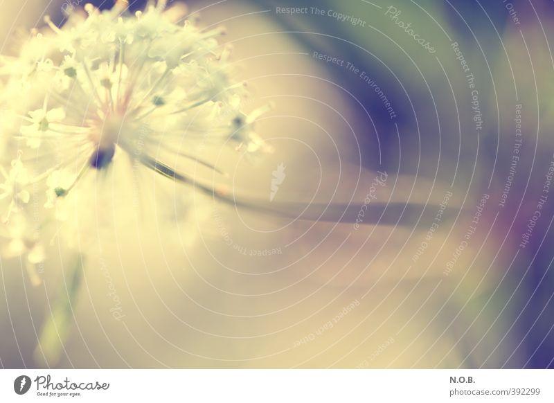 Herausragend Natur Sommer Pflanze Blüte Wachstum ästhetisch Blühend Wildpflanze