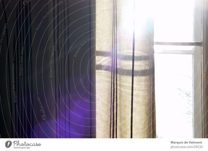 Am Nachmittag Sonne Fenster Stimmung Seil Häusliches Leben Vorhang Fensterkreuz