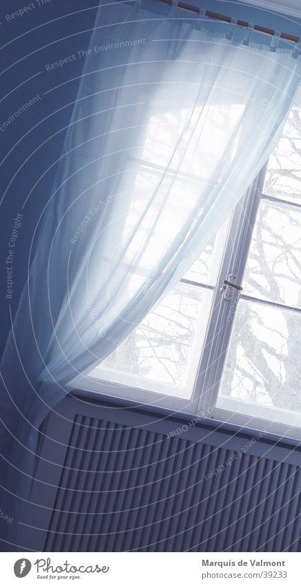 blaulicht blau Fenster Glas Aussicht Häusliches Leben Vorhang Heizkörper Fensterbrett Leitersprosse Fensterkreuz