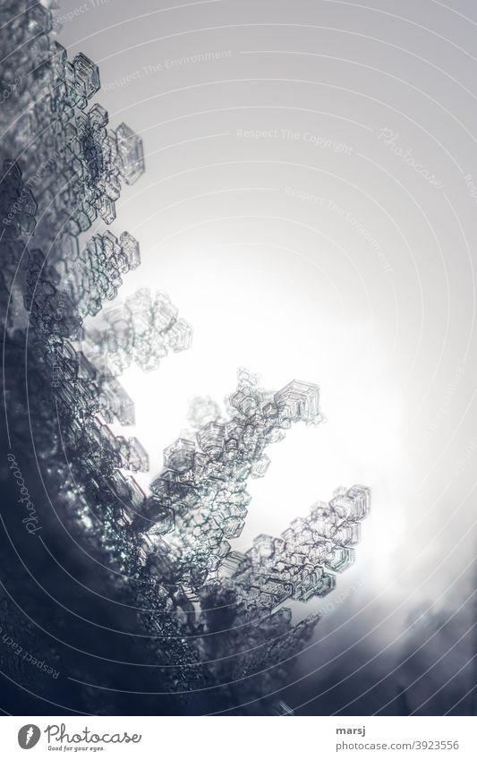 Eiskristallwelt Kristalle filigran Kreativität Reinheit einzigartig elegant Kristallstrukturen Frost Winter Willensstärke außergewöhnlich kalt Kraft Mut