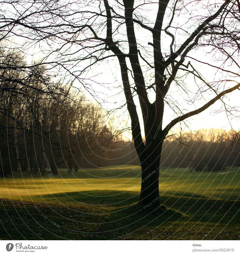 Fuchs, Hase, Igel, Gutenacht wiese abend baum gegenlicht wald sonnig stimmung hügelig dunkel umwelt natur wellenförmig rasen äste kahl wintersonne