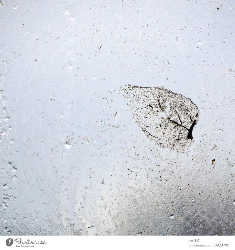 Abgeblättert Blatt Glasscheibe nass nah durchscheinend schemenhaft anhaften klein durchsichtig Herbstlaub kleben Vergänglichkeit Textfreiraum rechts Unschärfe