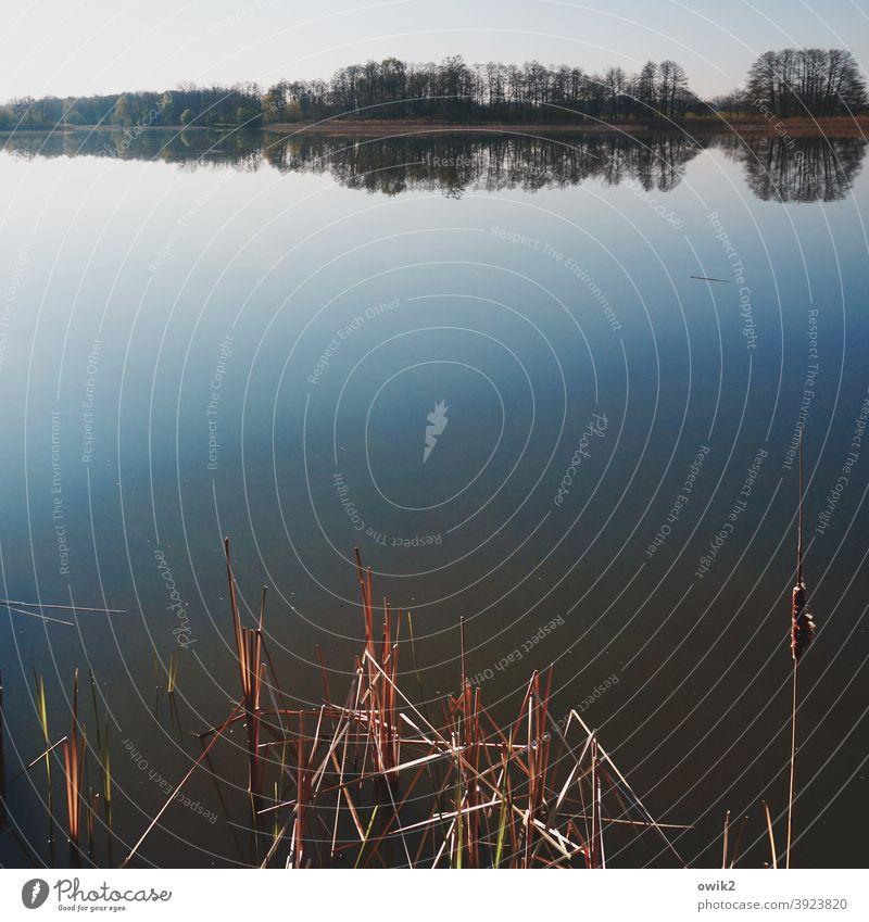 Dorfteich Seeufer Reflexion & Spiegelung Natur Schönes Wetter Umwelt friedlich Idylle Farbfoto Außenaufnahme Wasser Menschenleer ruhig Kontrast Totale