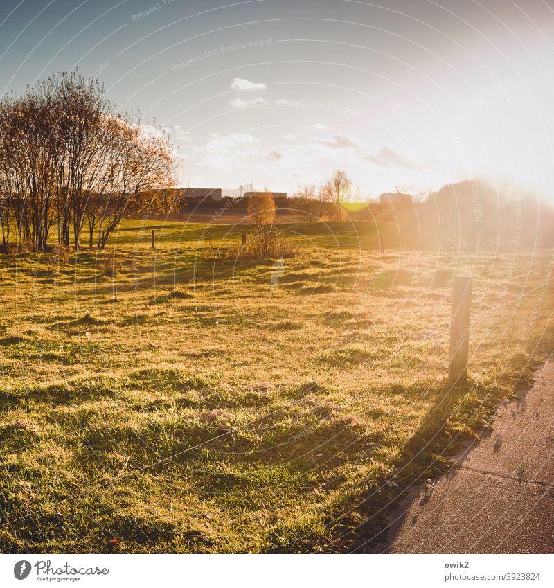 Wegesrand Schönes Wetter Umwelt Sträucher Idylle lichtdurchflutet Herbst Menschenleer Außenaufnahme Farbfoto Natur Wiese Lichtung Sonne Gegenlicht Sonnenlicht