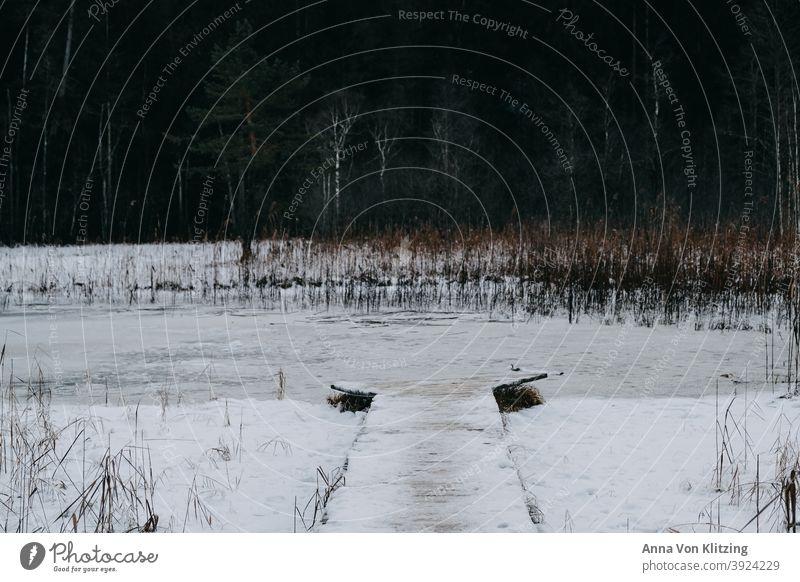 Zugefrorener See Winter zugefrorener see eis kalt Steg Schnee frieren Schilf Frost Natur Landschaft Seeufer Menschenleer ruhig weiß Umwelt Außenaufnahme Baum