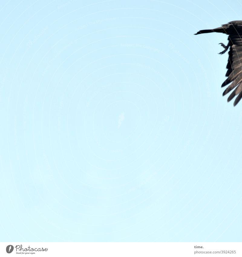 4eyes | leaving 2020 himmel vogel fliegen flügel sonnig gefieder füße tier tierportrait textfreiraum