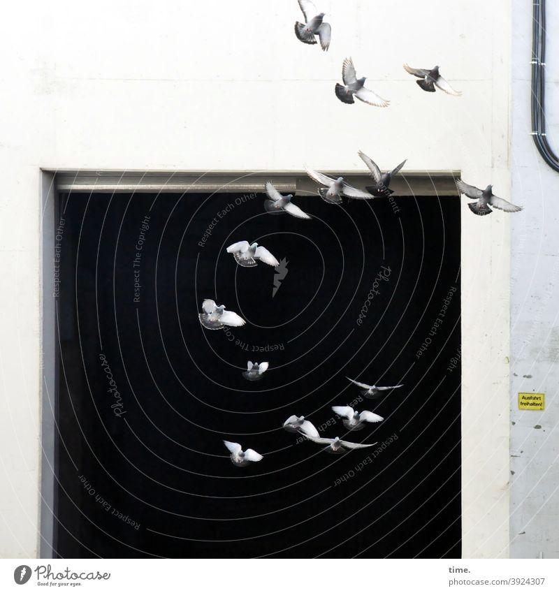 4eyes | greeting 2021 vogel fliegen flügel gefieder tier tierportrait werkhalle tor vögel tauben mauer wand dunkel abflussrohr offen aufgescheucht