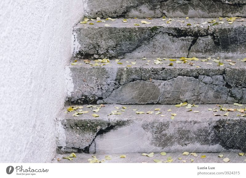 Herbstlaub auf einer alten Treppe aus Stein und Beton, mit vielen Rissen Architektur Sprünge grau weiß Hauswand Rauputz herbstlich Außenaufnahme Menschenleer