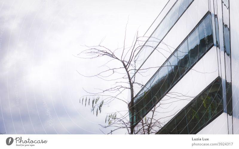 Fassade eines Bürogebäudes, kahle Äste und grauer Himmel Herbst Zweige u. Äste Baum Außenaufnahme Menschenleer Farbfoto Ast Geäst herbstlich Herbstlaub trist