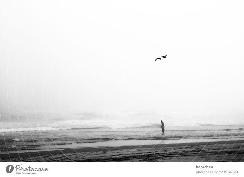 zwei vögel Wasser Fernweh genießen Sehnsucht frei träumen brenton on sea Tourismus Ferien & Urlaub & Reisen Ausflug Abenteuer Ferne Freiheit Junge Mann Kindheit