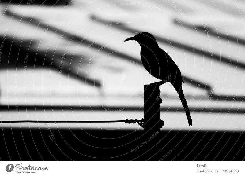Vogel Close Up Profil Silhouette Schwarz und Weiß auf Pole und Draht schwarz weiß Monochrom monochromatisch Hintergrund Linien Form Tierwelt konzeptionell