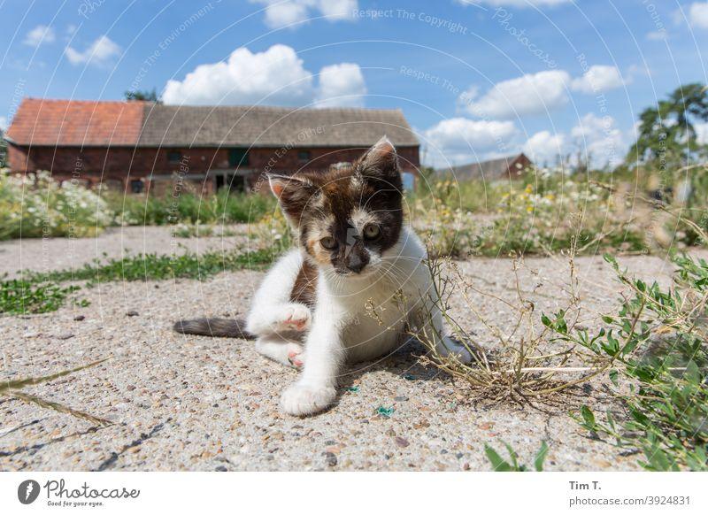 ein Bauernhof in der Prignitz. Eine kleine Katze sitzt und blickt in die Kamera kitten prignitz Fell Haustier Tier Farbfoto Tierporträt Hauskatze niedlich Kater
