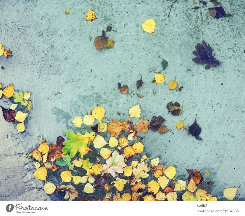 Herbst von oben Teich See Wasser schaukeln Blatt Wasseroberfläche viele Farbfoto mehrfarbig Außenaufnahme Detailaufnahme Nahaufnahme Laubblätter herbstlich