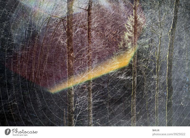 Für Ulrike statt Schafe l Waldkaleidoskop Tanne Licht Lichteinfall Baum Natur Sonne Sonnenstrahlen Sonnenlicht Umwelt Landschaft Pflanze Gegenlicht Menschenleer