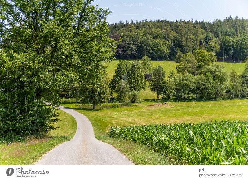 Kulisse Bayerischer Wald bayerischer wald Bayern idyllisch Natur Wiese Weide Sommer friedlich Gras baum Landschaft Erholung Umweltschutz deutschland