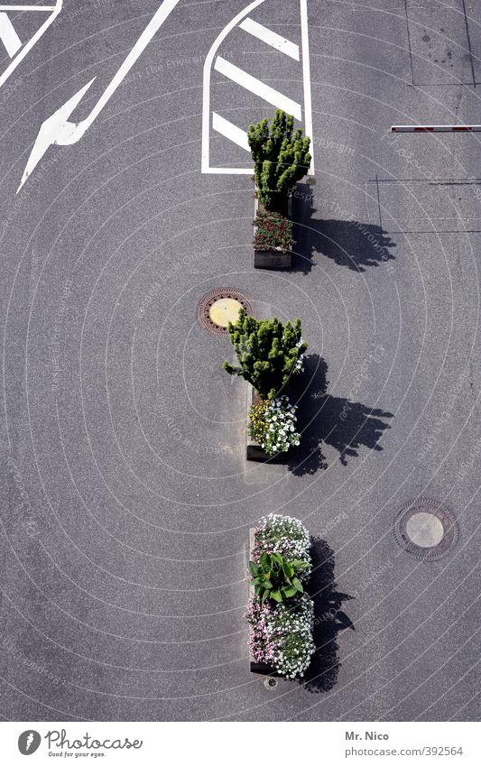 Unsere Stadt soll schöner werden Stadt Pflanze Blume Umwelt Straße Wege & Pfade Platz Sträucher Asphalt Pfeil Verkehrswege Grenze Parkplatz Straßenkreuzung verschönern Straßenverkehr
