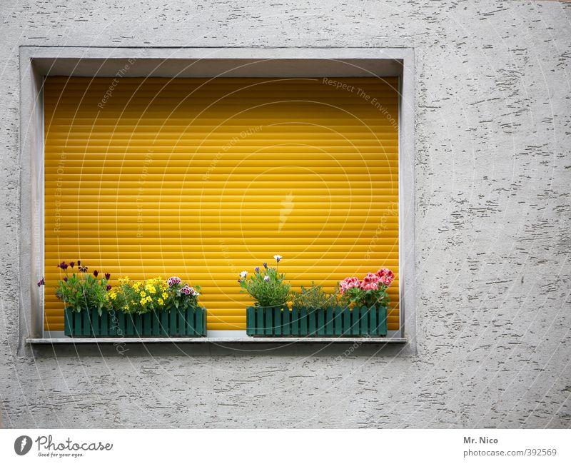 gegenüber Lifestyle Häusliches Leben Wohnung Dekoration & Verzierung Pflanze Blume Gebäude Fassade gelb Rollo Fensterbrett Blumenkasten geschlossen Putzfassade