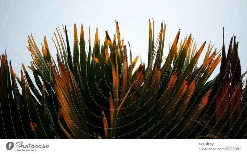 Palmblatt Blatt grün Natur Pflanze Farbe tropisch Hintergrund Baum abstrakt Handfläche Schönheit Muster Textur Leben Wachstum Dschungel Raum Tapete Nahaufnahme