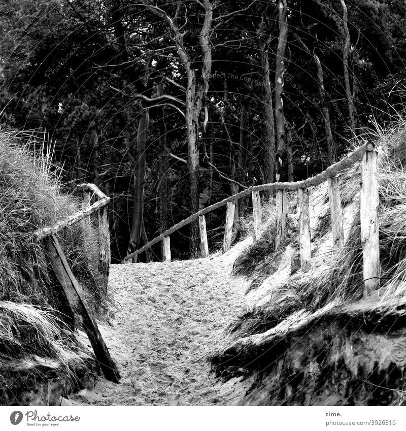Geschichten vom Zaun (95) strand sand geländer zaun wald kiefern übergang hügel düne schutzgebiet schutzzaun fußspuren strandübergang baum bäume