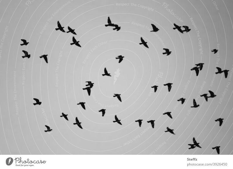 2021 | frei sein und fliegen Vögel Vogelschwarm Vogelflug fliegende Vögel Vogelbeobachtung Schwarm Schwarmverhalten Freiheit Luft zusammen Zusammenhalt