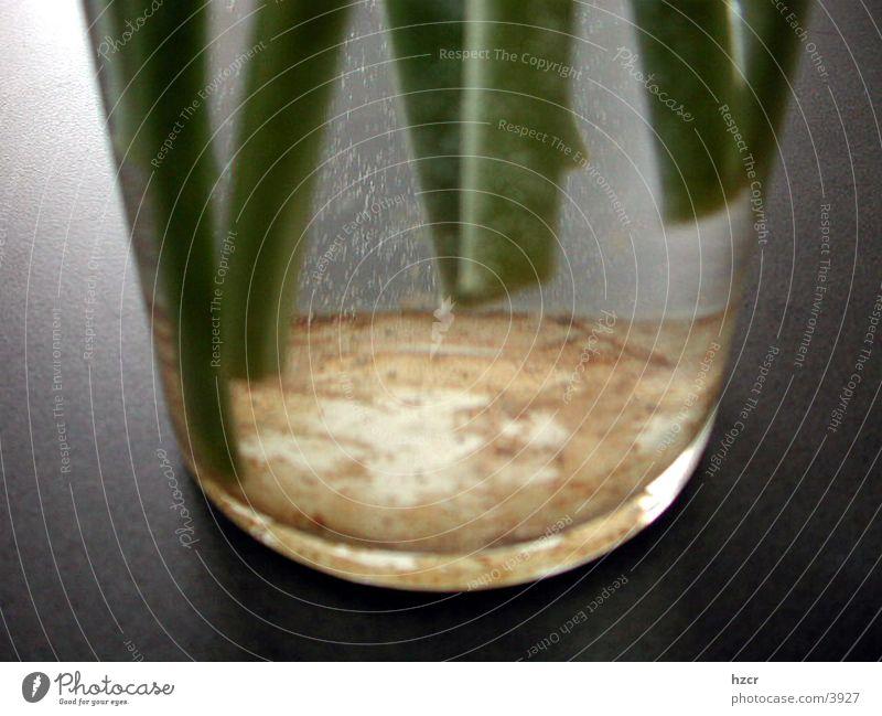 stengel Vase Dinge Tulpenstengel