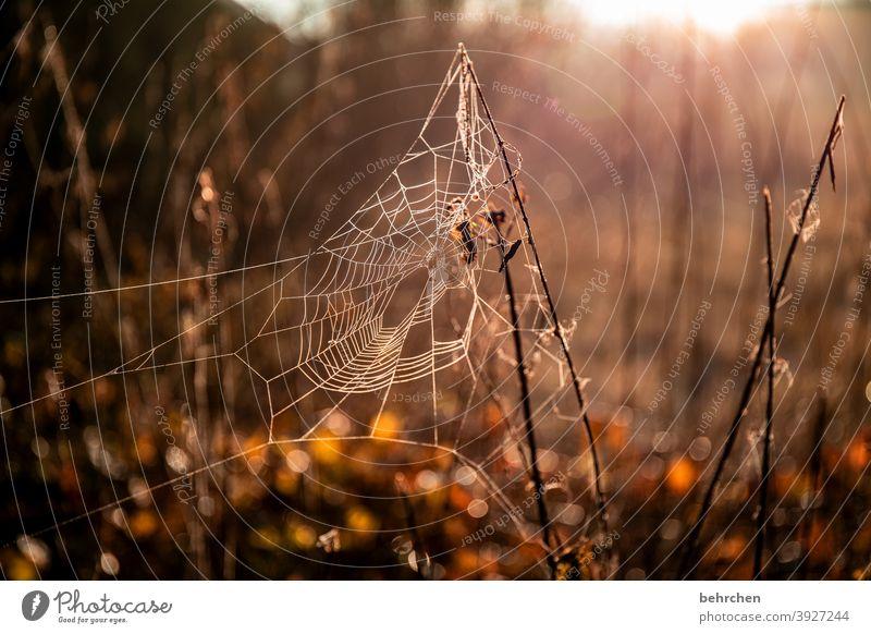 altweibersommer...für willma;)) Jahreszeiten Winter Herbst Wald Kunstwerk spinnenweben verträumt Gegenlicht Licht Feld Blume Zweige u. Äste Garten Wiese