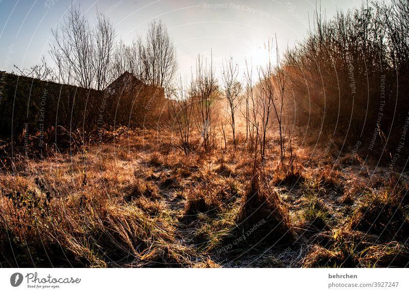 ein guter morgen... Hoffnung Gegenlicht Sonnenstern Sonnenaufgang Landschaft Herbstwald Sonnenstrahlen Idylle Himmel herbstspaziergang Herbstfärbung herbstlich