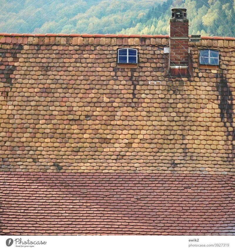 Dachwohnung alt Dachfenster Dachziegel Fenster hoch oben Gebäude Haus Detailaufnahme Außenaufnahme Farbfoto Verfall historisch Fassade Zahn der Zeit verwohnt