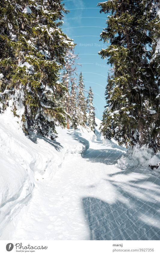 Sonntag, Zeit für einen Wintertraum-Spaziergang Wintertag Wanderwege Schnee winterlich Spazierweg Winterwald Winterzauber Winterurlaub Natur kalt Winterstimmung