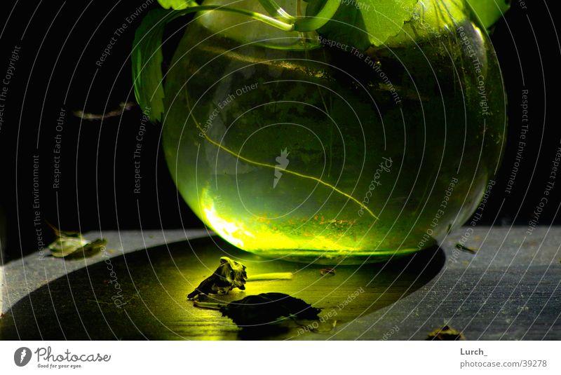 Glasvase Algen Sonnenstrahlen Vase grün obskur
