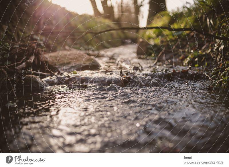 Unten am Bach, da fließt das klare kalte Wasser | Das Gegenlicht des Sonnenscheins fängt sich im Wasser fließen Fluss entgegen kühl frisch erfrischend nass