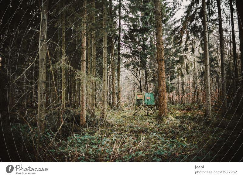 Im dunklen Wald ist eine kleine Lichtung mit einem Hochsitz für den Jäger Nadelbaum Nadelwald Mischwald dunkel Baum Natur Tanne Baumstamm Außenaufnahme grün