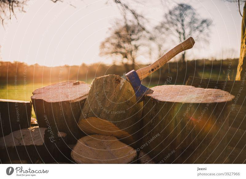 Gesägtes Holz liegt im Wald zum Hacken bereit | Axt ist den Stamm des Brennholzes geschlagen | Schönstes sonniges Wetter für die Waldarbeit waldarbeit