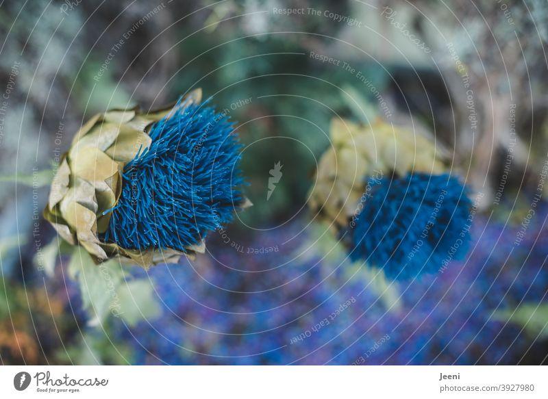 Blaue Blumen vor weichem Hintergrund blau Blaue Blume der Romantik blaue Blumen Natur Pflanze Blüte Makroaufnahme natürlich Blühend Tageslicht romantisch