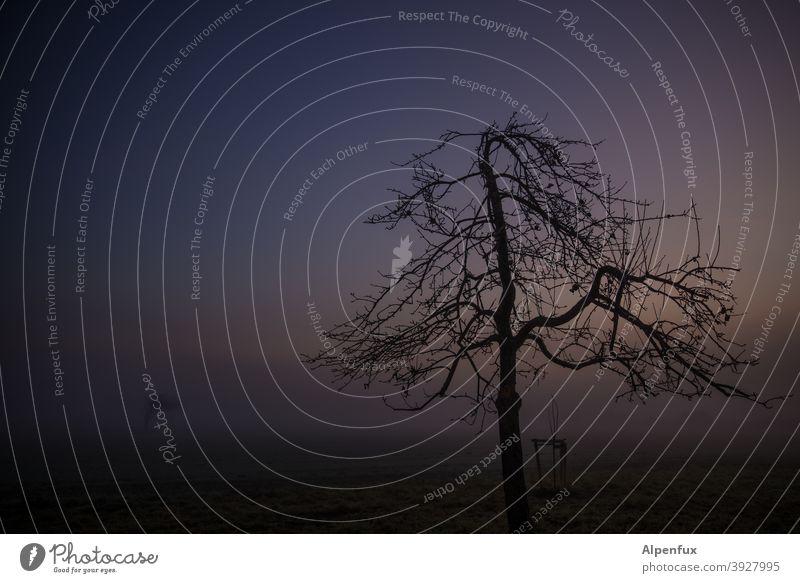 temporär | abgestorben Morgendämmerung Sonnenaufgang Nebel Natur Baum Außenaufnahme Feld Himmel Farbfoto Landschaft Menschenleer Herbst Umwelt Einsamkeit stille