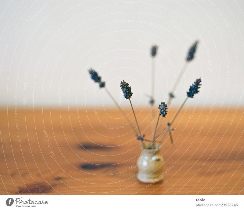 Nahaufnahme von Lavendelblüten in Minivase natürlich Idylle Natur Pflanze analog KodakEktar100 Totale Schwache Tiefenschärfe Tag Detailaufnahme Farbfoto