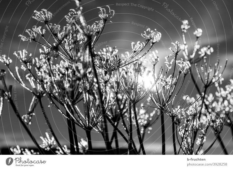 kalter Wintertag, gefrorene Pflanzen Eiskristall Kälte frostig Frost Natur frieren Raureif Schnee Außenaufnahme weiß Dezember Makroaufnahme Winterstimmung