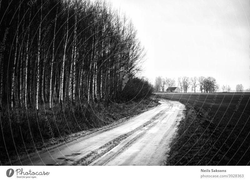 Landweg, der zum Gehöft auf dem Feld führt. Birkenwald in der Nähe der Straße. Lettische Landschaft im Dezember. Wald Haus Anwesen Schotterstraße